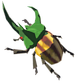 Rugged-rhino-beetle.png