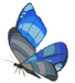 Winterwing-butterfly.png
