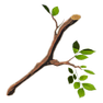 Tree-branch.png
