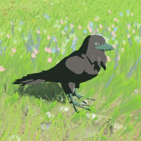 Mountain-crow.jpg