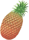 LA Pineapple Artwork.png
